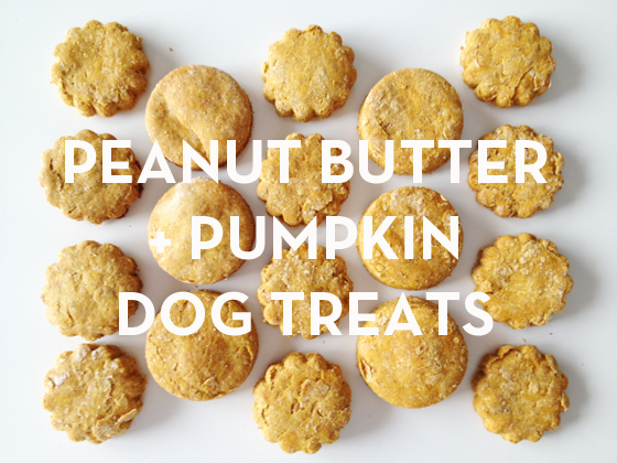 Dog Treats Pumpkin Wheat Flour